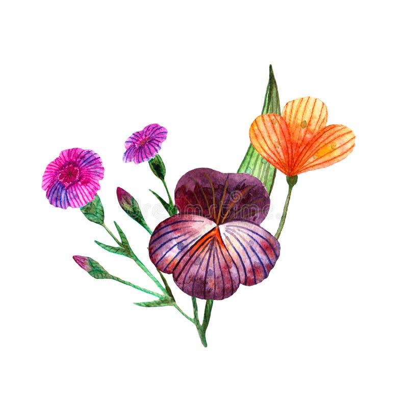 Wildflowers dell'acquerello Mazzo sveglio isolato dei fiori e delle erbe del prato illustrazione di stock