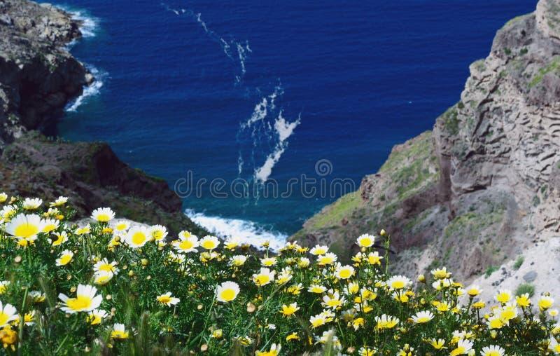 Wildflowers della margherita su un fondo di cielo blu, del mare blu e dell'isola Mattina soleggiata di estate sull'isola di Santo fotografia stock libera da diritti