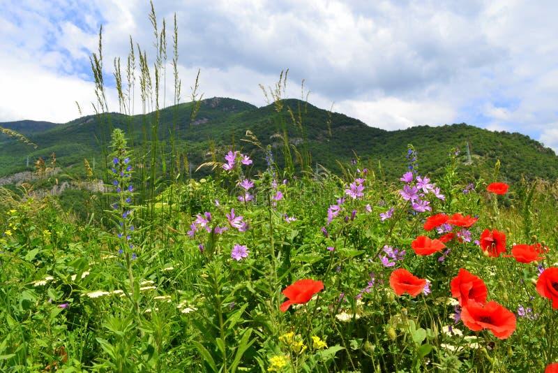Download Wildflowers Della Montagna Di Estate Fotografia Stock - Immagine di fiori, idilliaco: 56880252