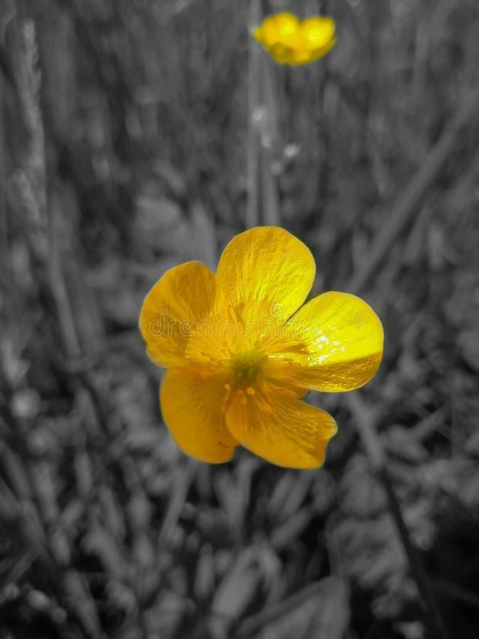 Wildflowers della sorgente fotografia stock