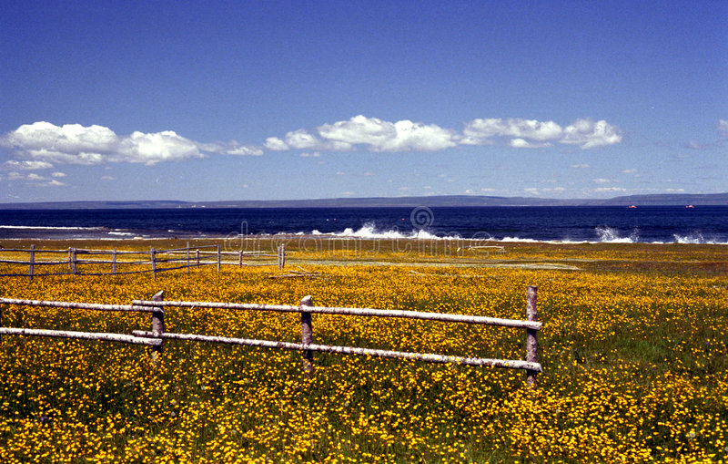 Wildflowers della Terranova fotografia stock