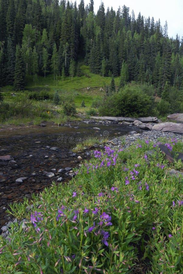 Wildflowers in den Kolorado-felsigen Bergen stockbild