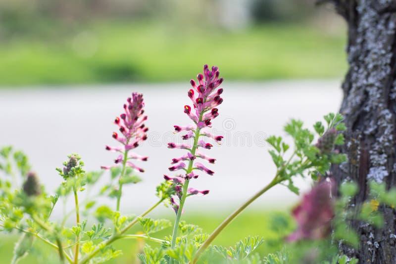Wildflowers dentellare fotografie stock libere da diritti