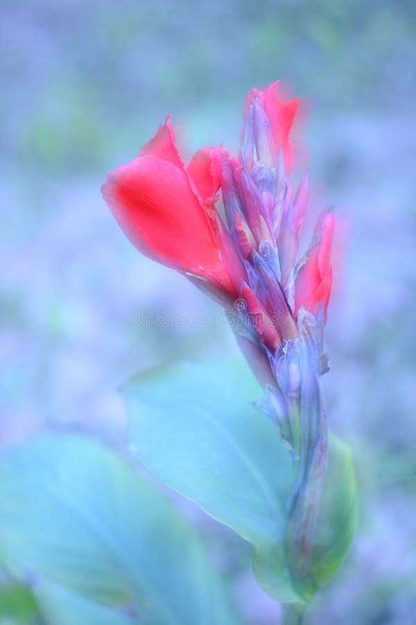 Wildflowers di estate immagine stock