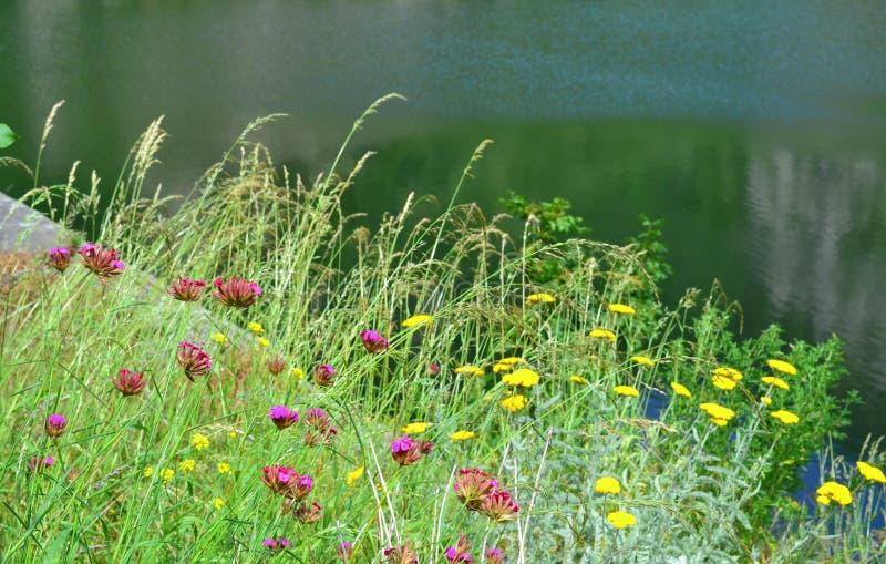 Download Wildflowers Di Estate Di Lakeside Fotografia Stock - Immagine di destinazione, nave: 56879962