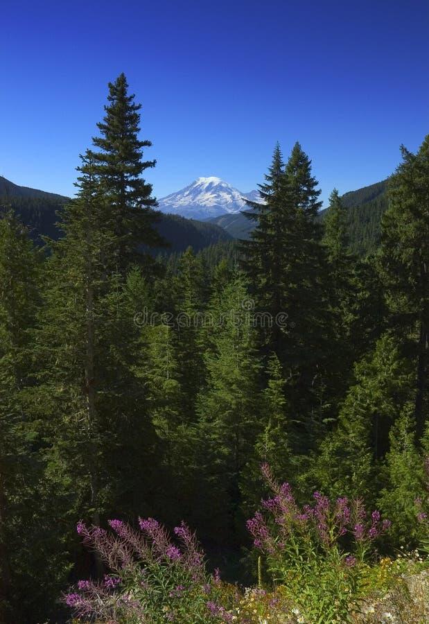 Wildflowers di nord-ovest pacifici immagini stock libere da diritti