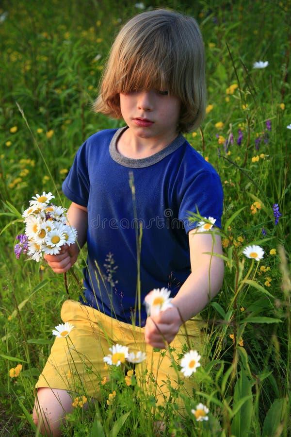 Wildflowers di raccolto del bambino fotografie stock