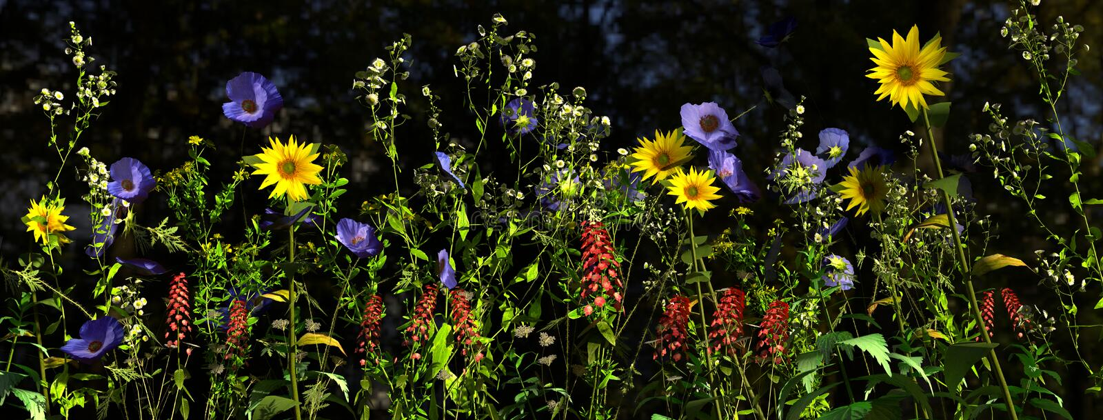 Wildflowers in direct sunlight in a field royalty free stock photo
