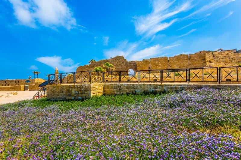 Wildflowers do Lilac foto de stock royalty free