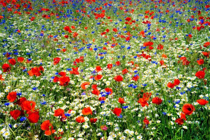 Wildflowers do verão fotografia de stock royalty free