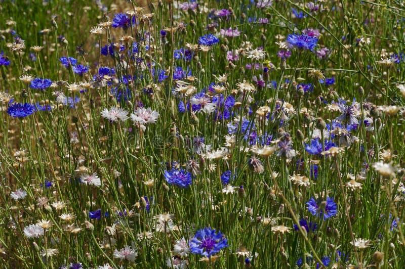 Wildflowers do verão de Gardem fotografia de stock royalty free