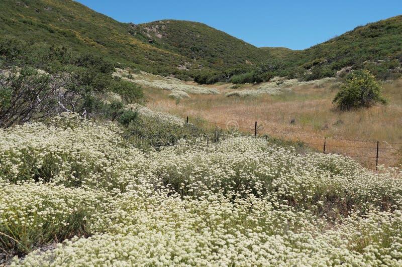 Wildflowers do verão em Califórnia fotografia de stock royalty free