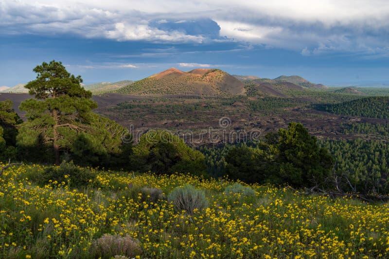 Wildflowers Do Ver?o Ao Leste Dos Picos Domínio Público Cc0 Imagem