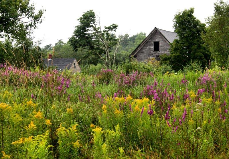 Wildflowers e celeiro fotos de stock