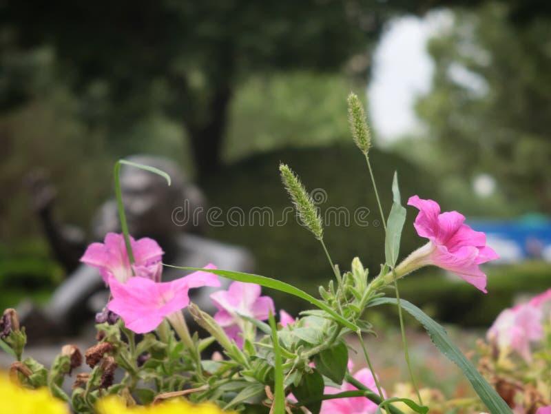 Wildflowers e grama da folha imagem de stock royalty free