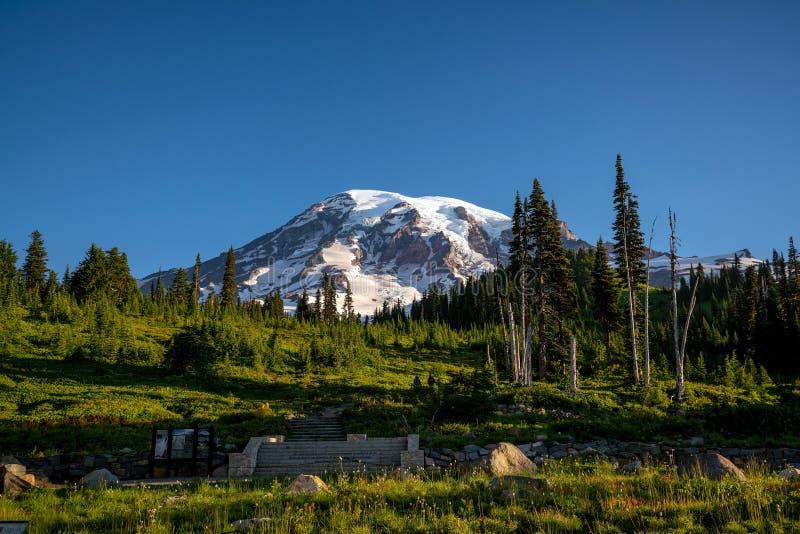 Wildflowers e o Monte Rainier bonitos, estado de Washington imagem de stock