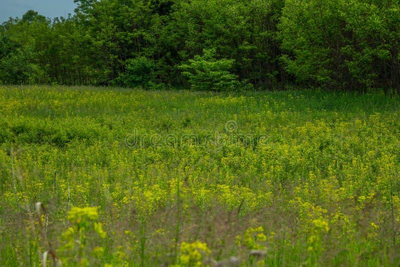 Wildflowers in een prairiedomein royalty-vrije stock fotografie
