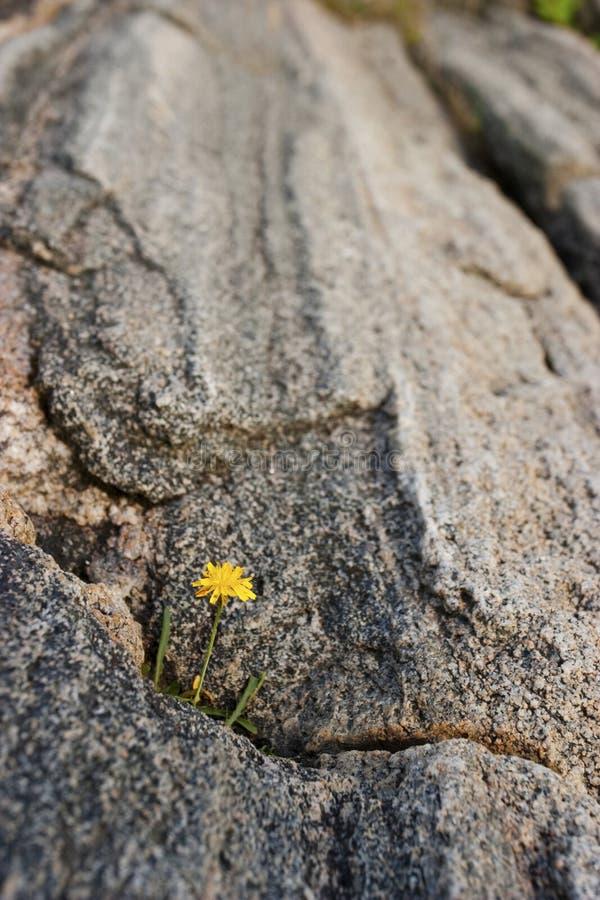 Wildflowers in een spleet stock fotografie