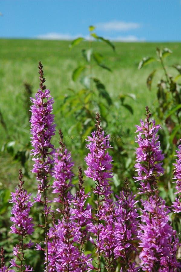 Wildflowers An Einem Sonnigen Tag Stockbild