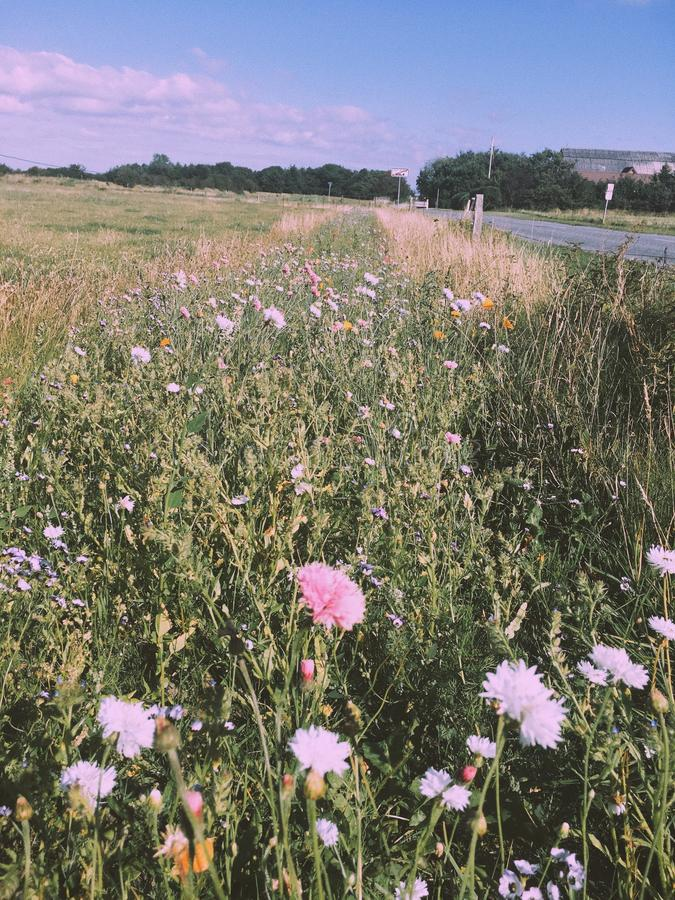 Wildflowers em Dinamarca fotografia de stock