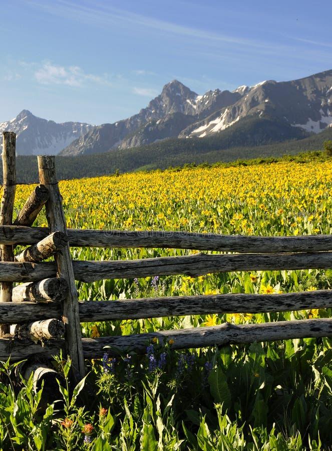 Wildflowers en Colorado imagen de archivo