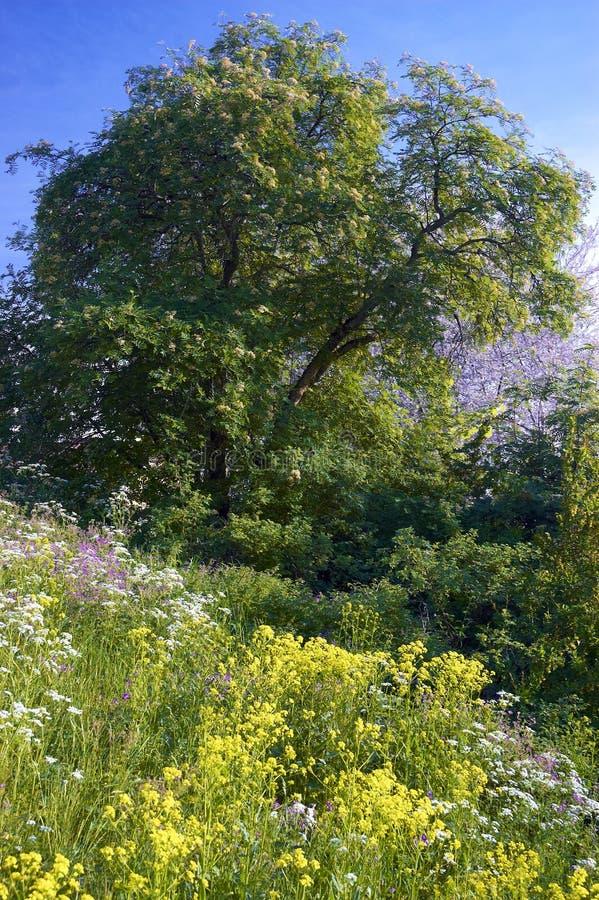 Wildflowers en de bomen van de zomer stock afbeelding