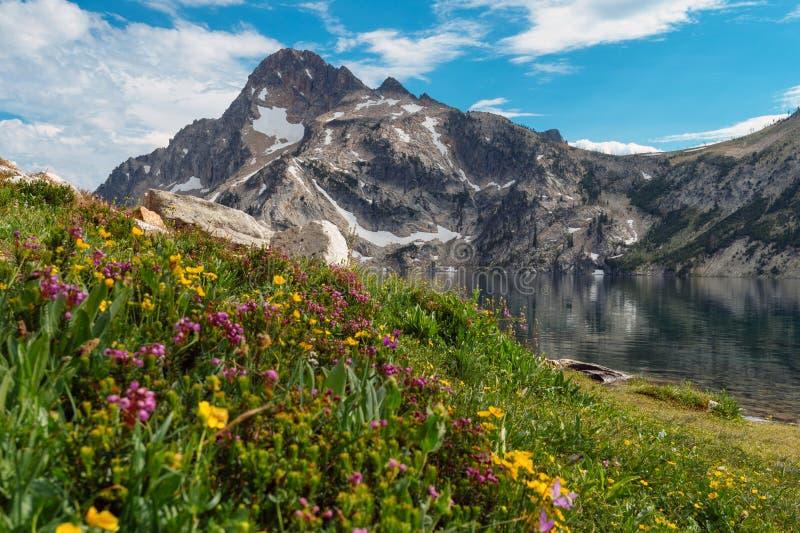 Wildflowers en el lago sawtooth, Idaho fotos de archivo libres de regalías