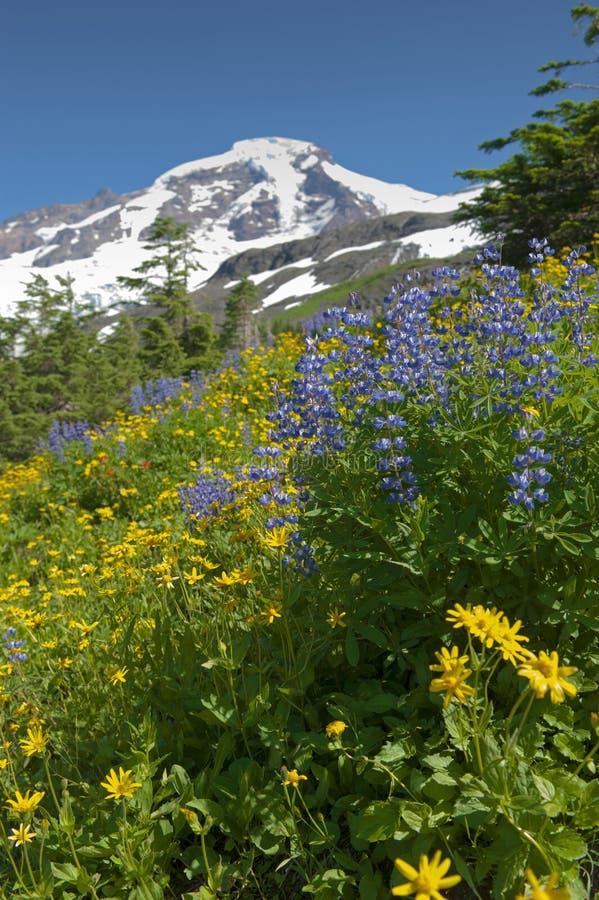 Wildflowers en el Mt panadero fotografía de archivo