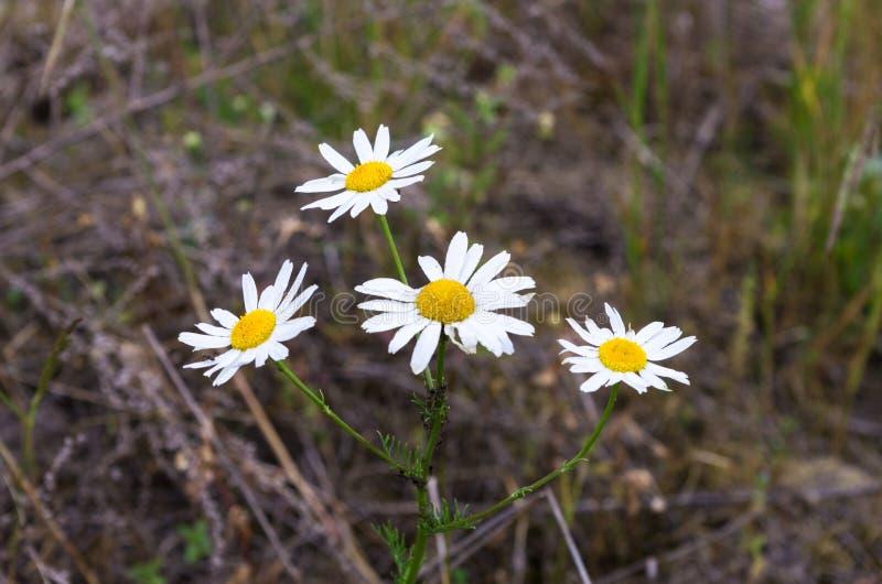 Wildflowers en el salvaje imagenes de archivo