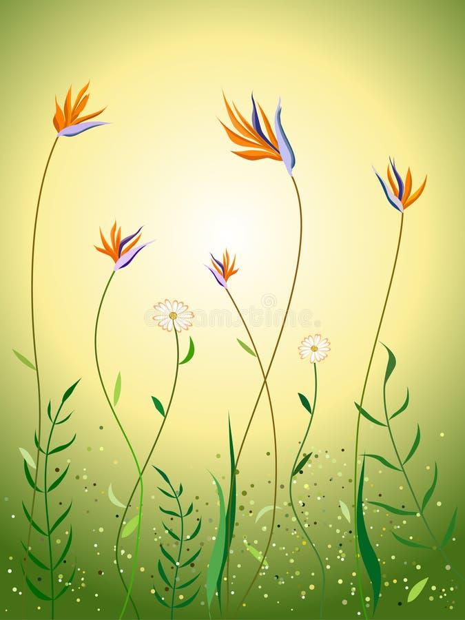 Wildflowers en escena del resorte ilustración del vector