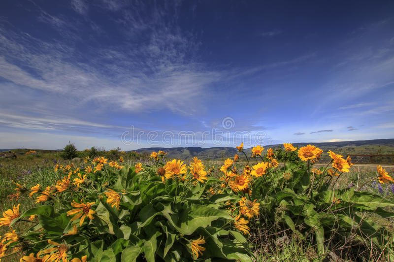 Wildflowers en gorge 2 de Fleuve Columbia image stock
