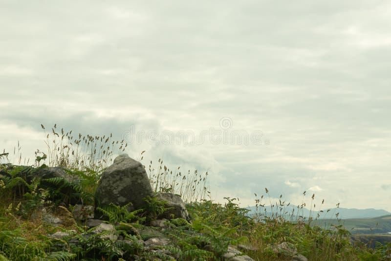 Wildflowers en haut d'une colline image libre de droits