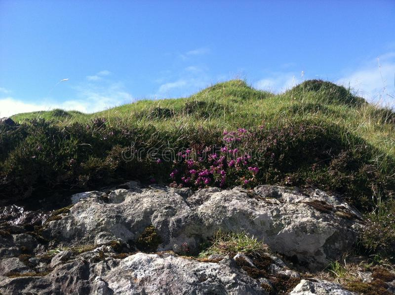 Wildflowers en la isla escocesa imagenes de archivo
