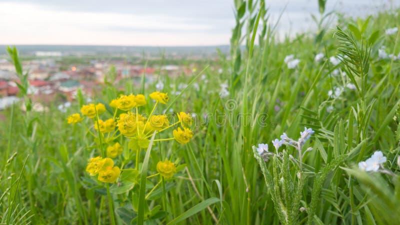 Wildflowers en lang heldergroen gras in de voorgrond Op de achtergrond in de afstand zijn de daken van de huizen royalty-vrije stock afbeelding