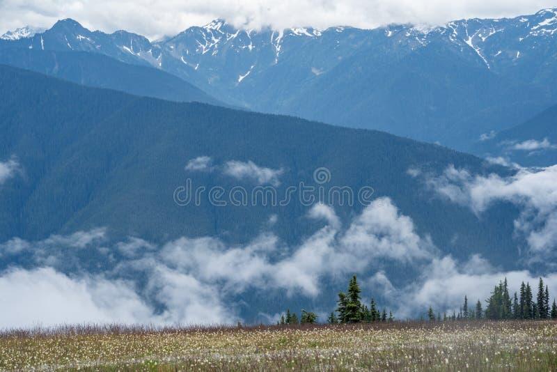 Wildflowers en un canto de la montaña en el huracán Ridge en parque nacional olímpico en Washington State imagen de archivo