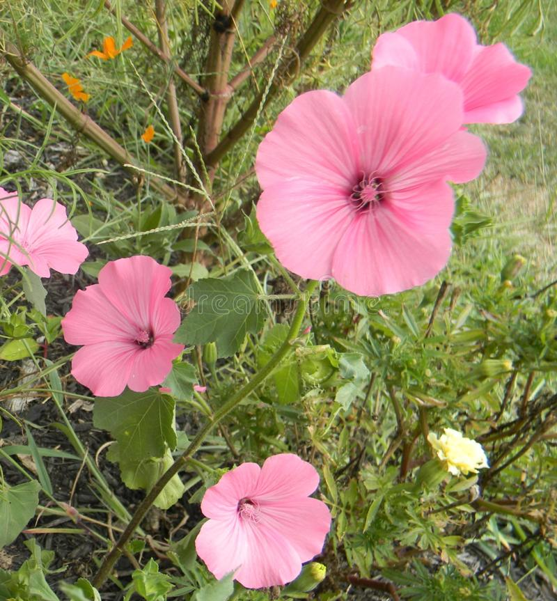 Wildflowers entwickelte volle Blüte stockfotografie