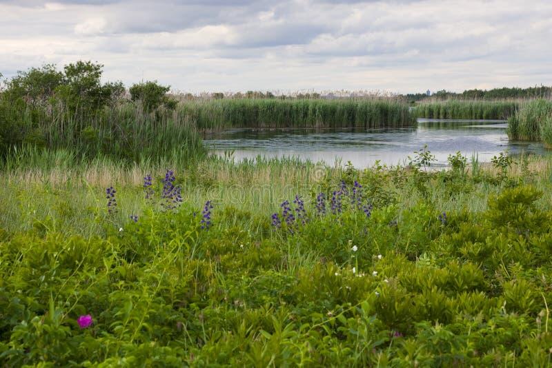 Wildflowers et l'étang occidental images libres de droits