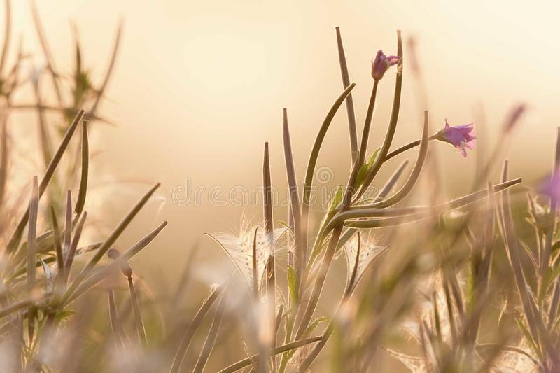 Wildflowers in the evening light. Lovely wildflowers in a field/meadow at a fen one summers evening. The light was so gorgeous from the setting sun royalty free stock image
