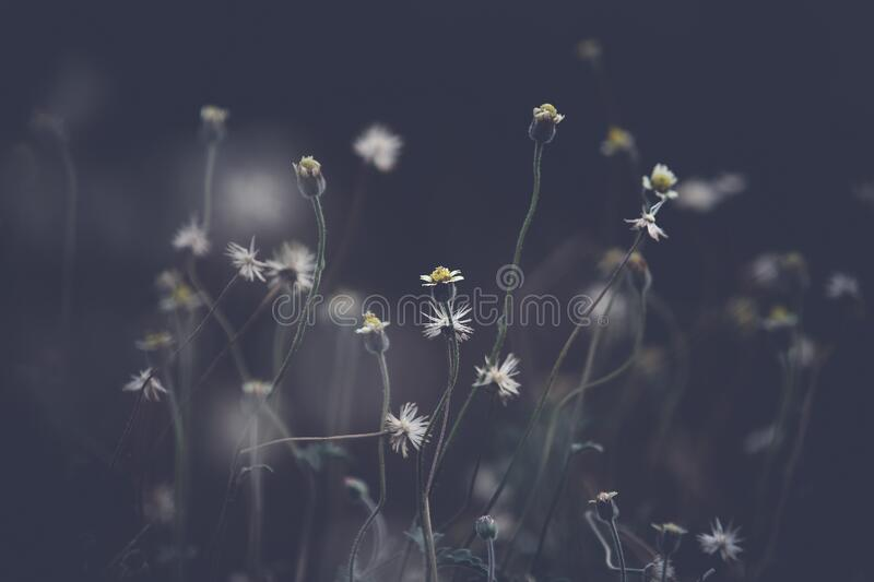 Wildflowers in field royalty free stock image