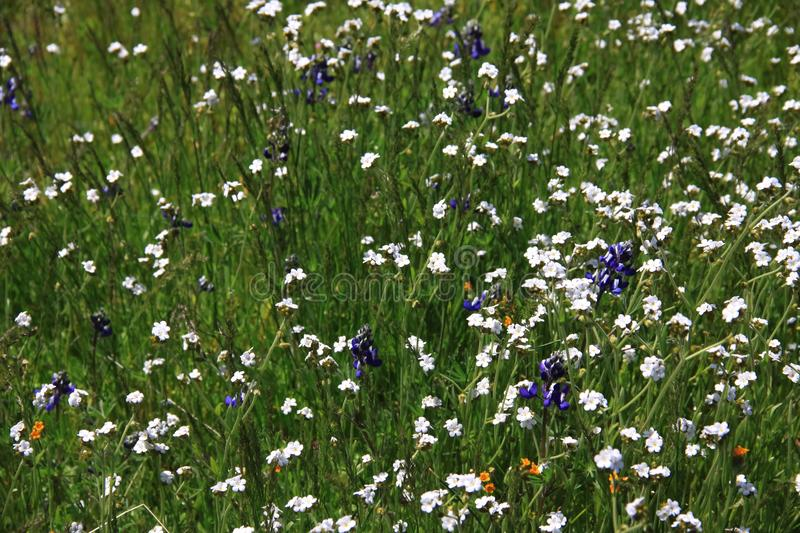 Wildflowers in a Field royalty free stock photos
