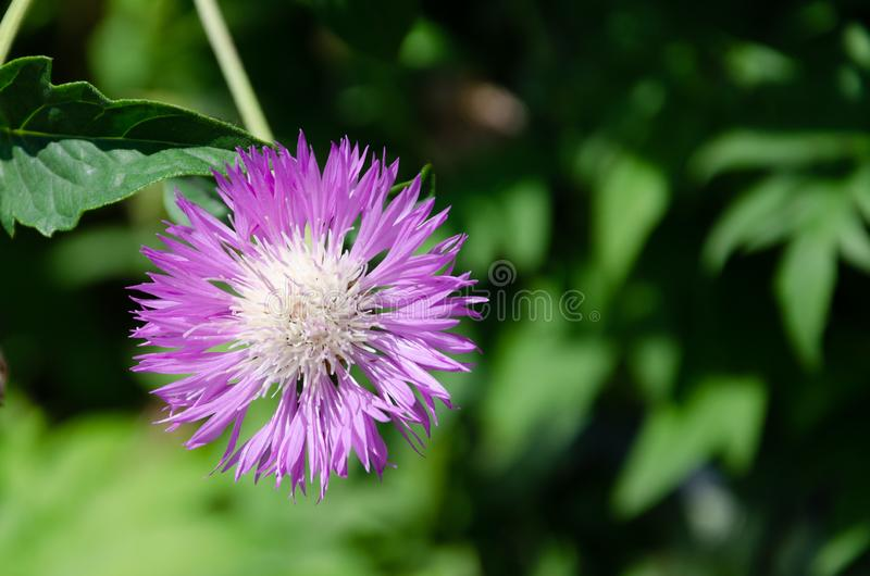 Wildflowers and field grass on green summer meadow background.  royalty free stock photos
