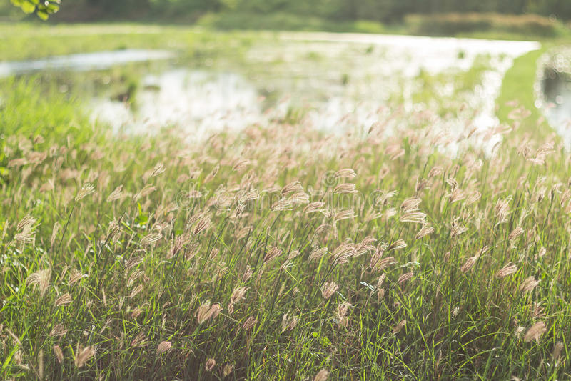 Wildflowers On The Field. Green grass and little wildflowers on the field. Beautiful summer landscape. (Soft focus and image feeling like a film camera stock photos