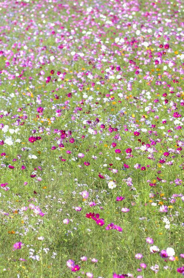 Wildflowers in field royalty free stock photography