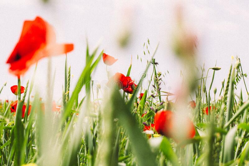 Wildflowers in field stock photos