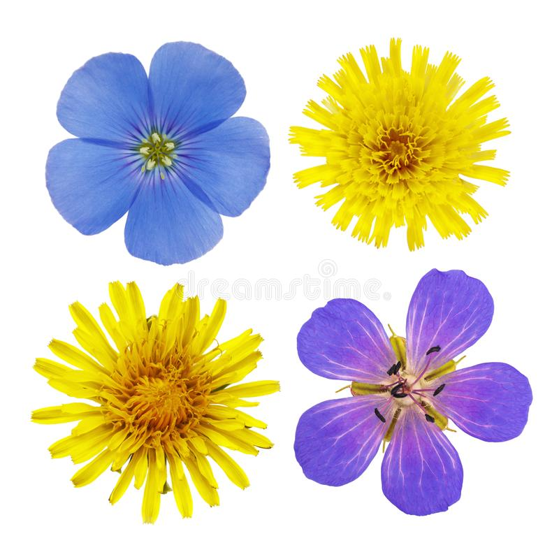 Wildflowers of flax, dandelion and geraniums photographed royalty free stock photography