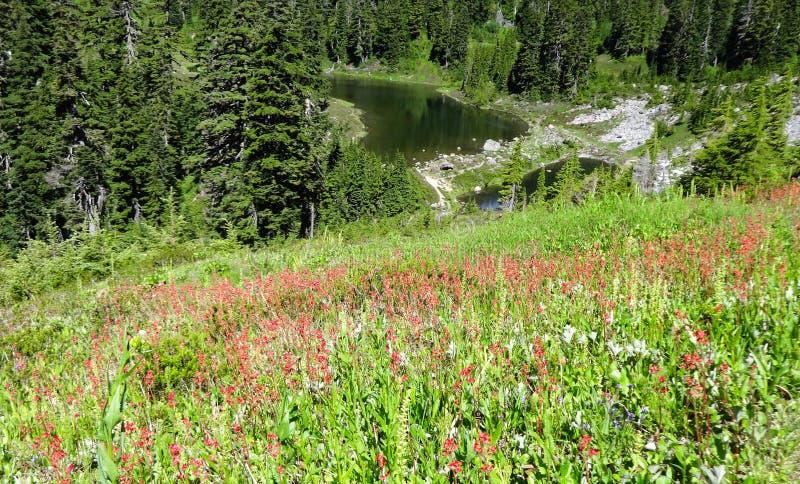 Wildflowers fleurissant près du lac Mazama images stock