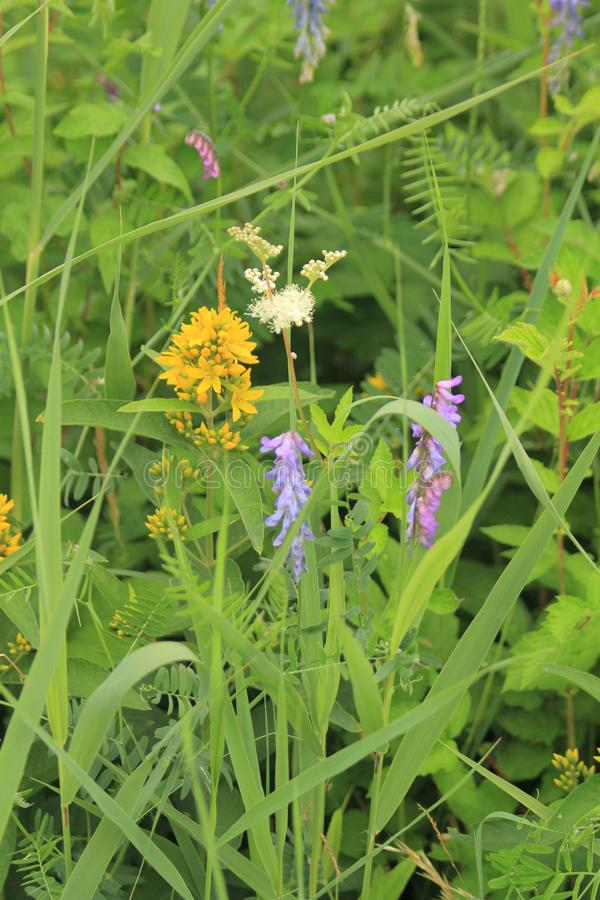 Wildflowers Flims Laax royalty-vrije stock afbeeldingen