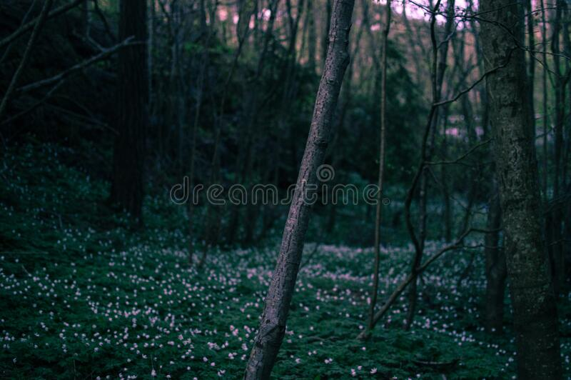 Wildflowers in forest stock images
