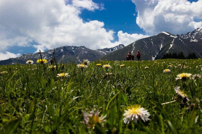 Wildflowers, grama, montanhistas fotografia de stock royalty free