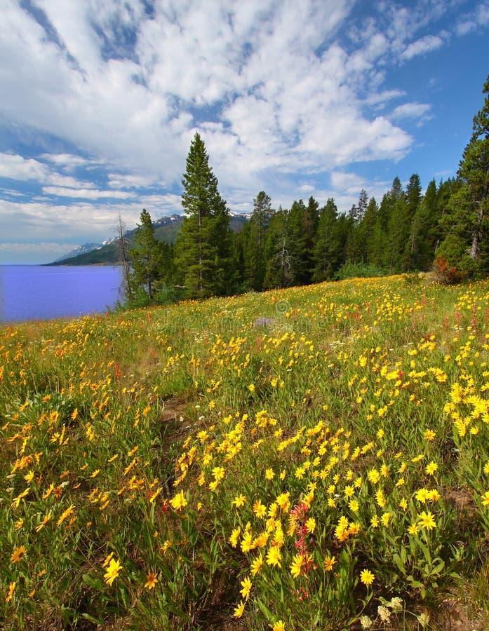 Wildflowers in großartigem Tetons lizenzfreie stockbilder